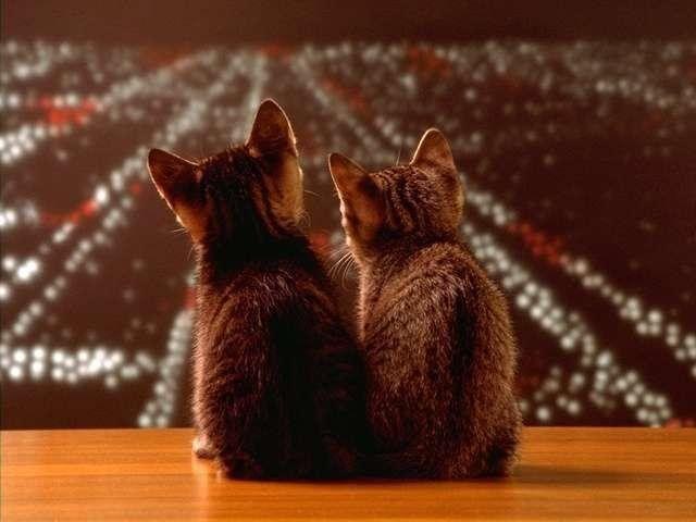 awww_adorable_kittens_640_11