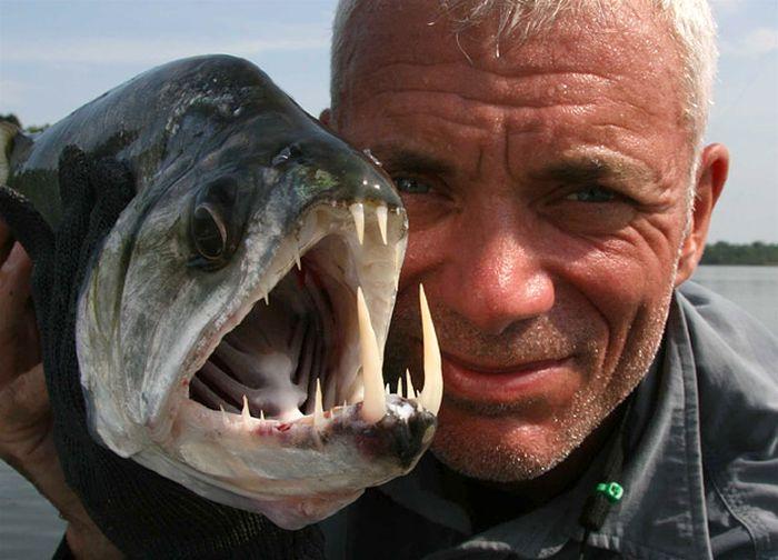 killer_fish_78