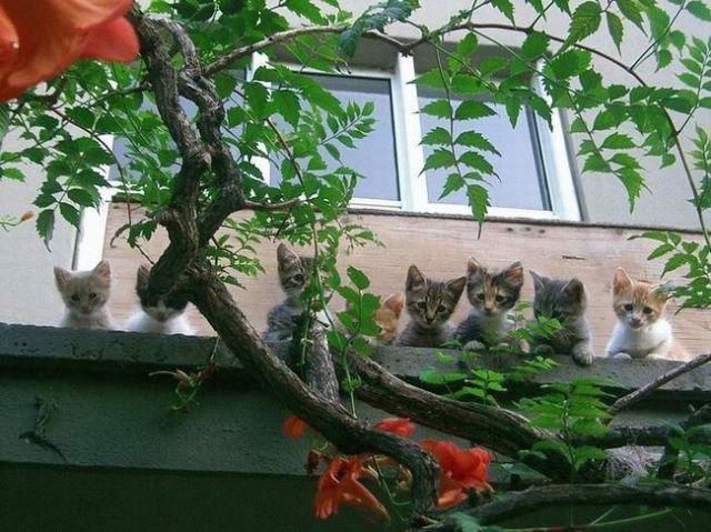 awww_adorable_kittens_640_07
