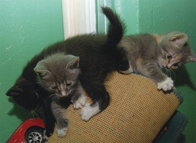 awww_adorable_kittens_640_02