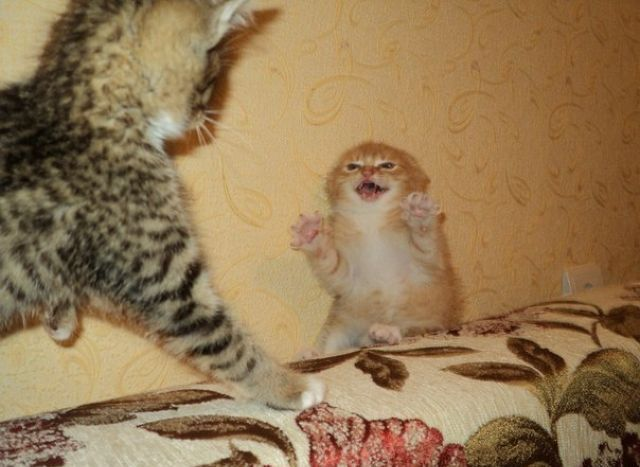 these_funny_animals_943_640_01