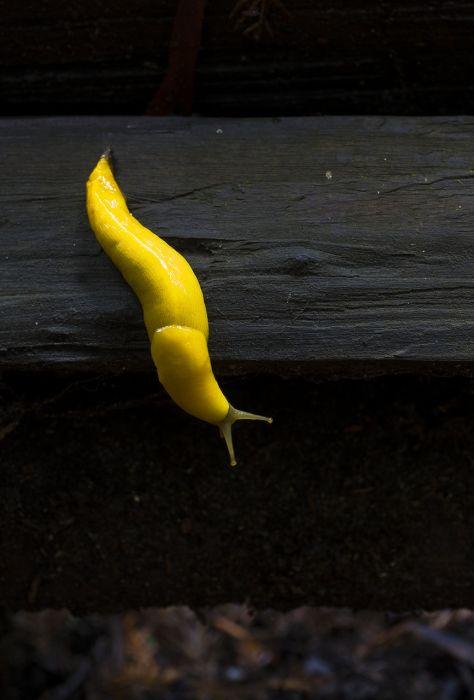 slugs_08