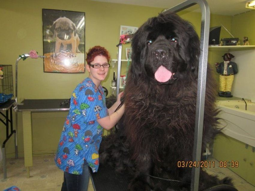 big-dog12