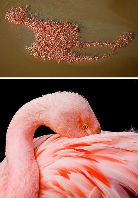 pink_animals_6a