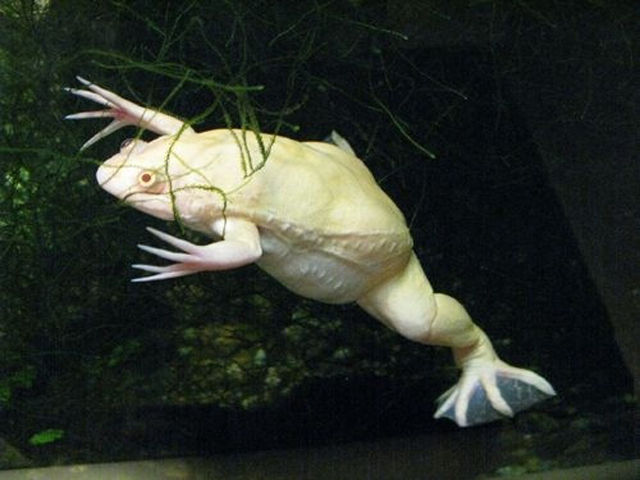 great_pictures_of_albino_animals_640_10