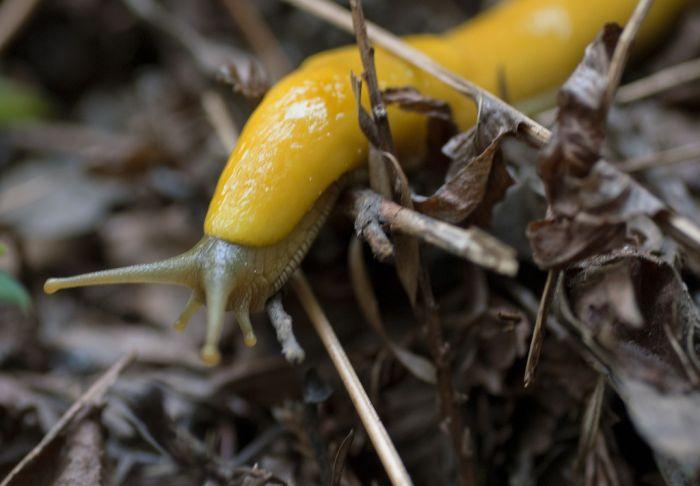 slugs_19