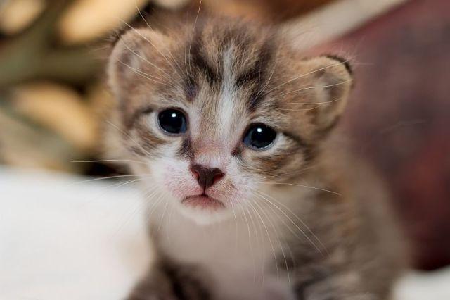 awww_adorable_kittens_640_37