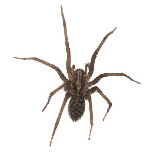 spider_bite_01