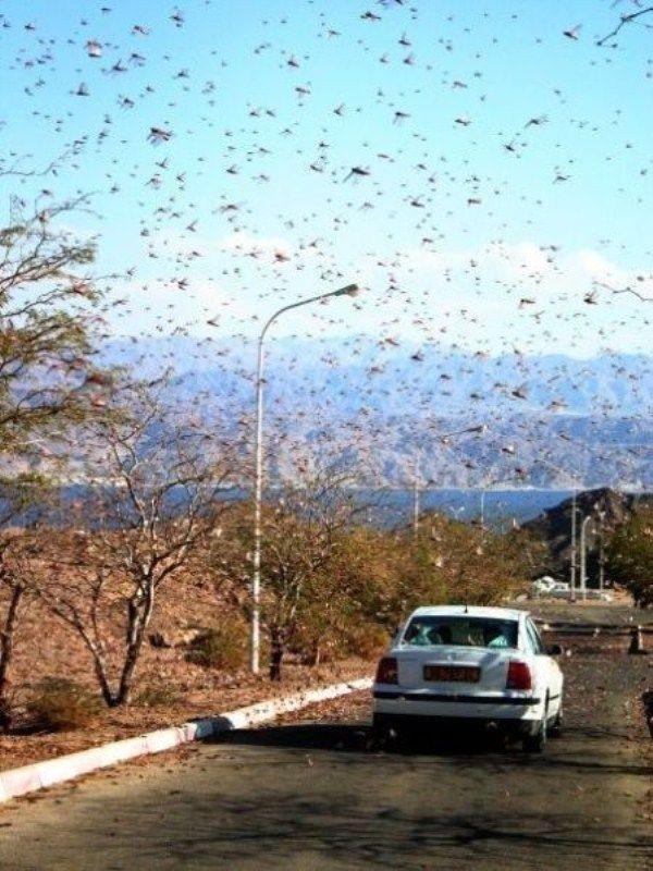 bug-attack26