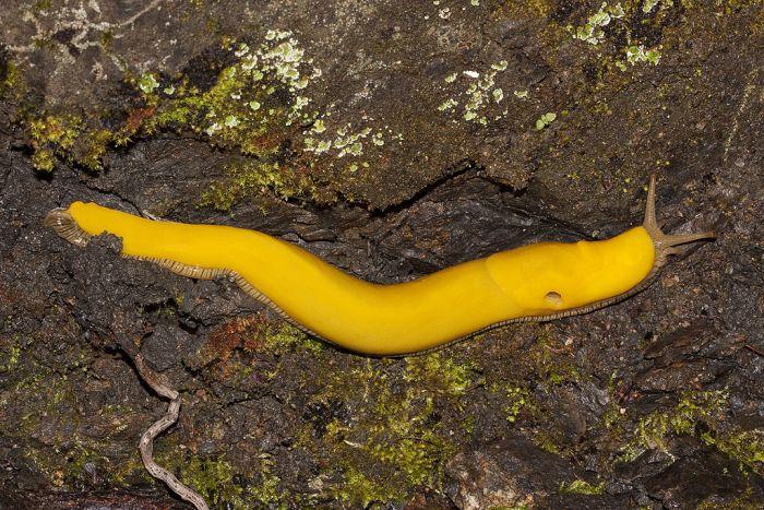 slugs_03