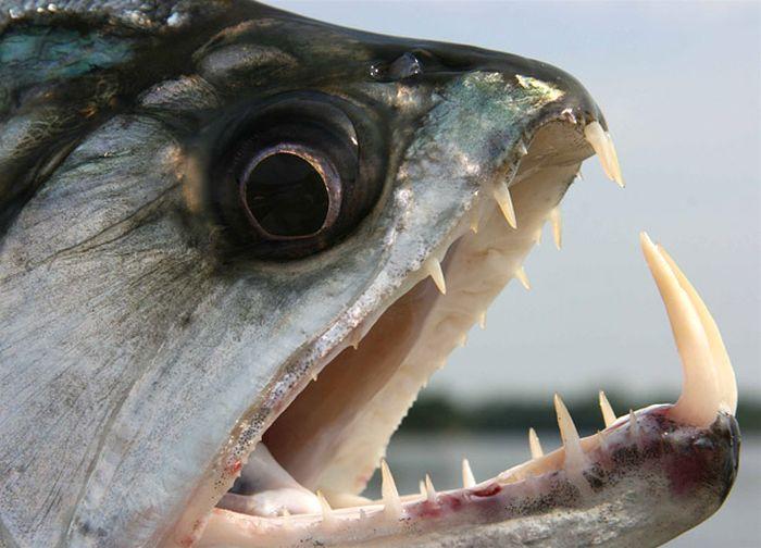 killer_fish_77