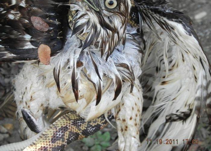 falcon_vs_snake_03