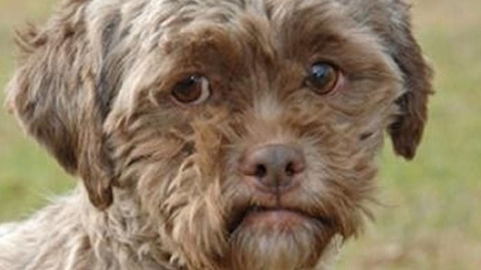 this_dog_has_a_man_face_04