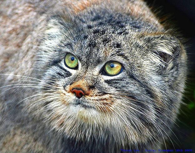 Wild-Animal-Eye-Retinas-7