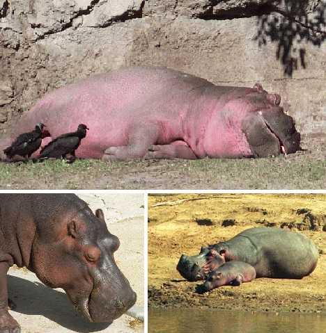 pink_animals_9a