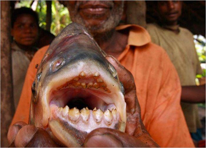 killer_fish_86
