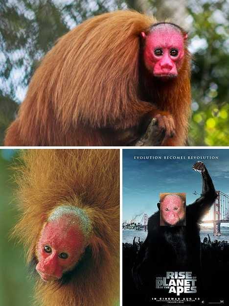 pink_animals_7c
