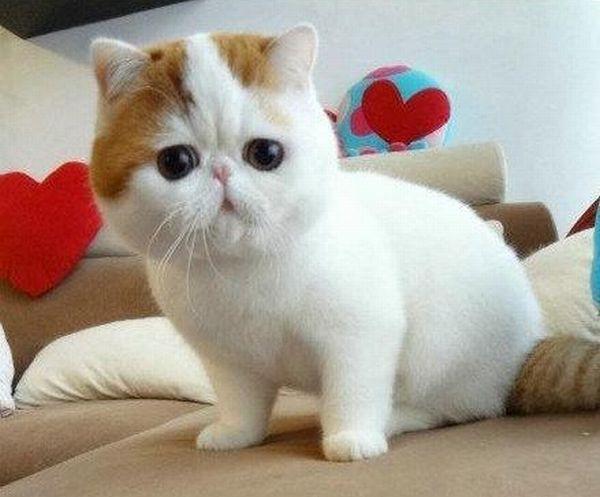 naice_cat_07