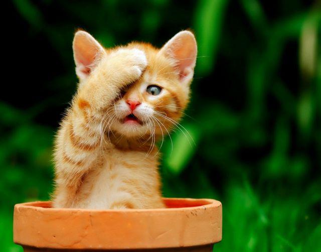 awww_adorable_kittens_640_100