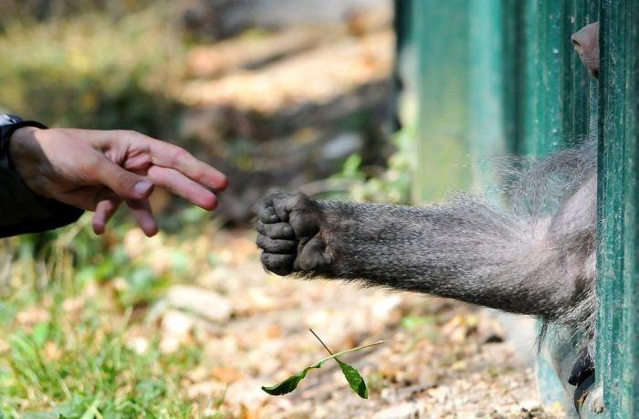 primates_36