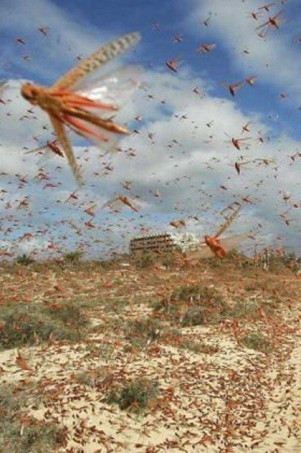 bug-attack25