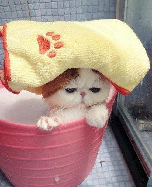 naice_cat_05