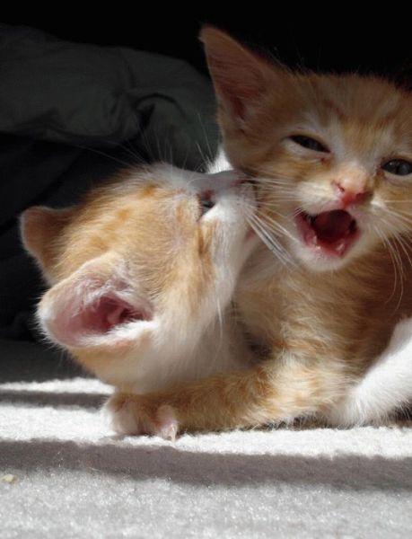 awww_adorable_kittens_640_43