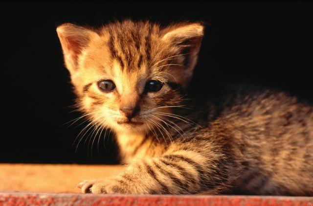 awww_adorable_kittens_640_49