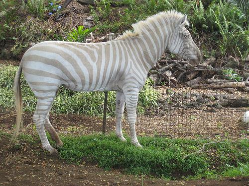 2213298226_9b843081fa_Albino_animals-s500x375-1309-580